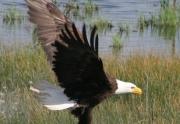 img_2470-01-eagle-landing-davies