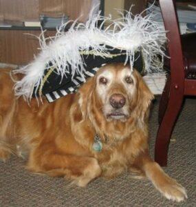 Cloe the dog wearing a hat