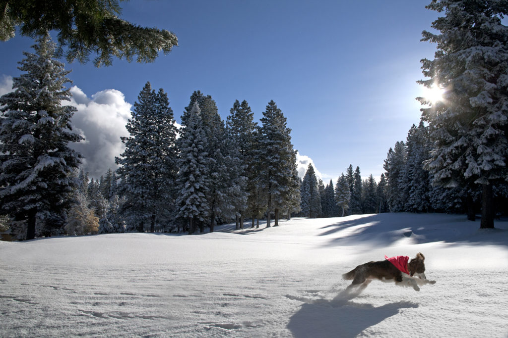A Christmas Snow.A Christmas Snow Romp At Lake Almanor