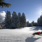 A Christmas Snow Romp at Lake Almanor